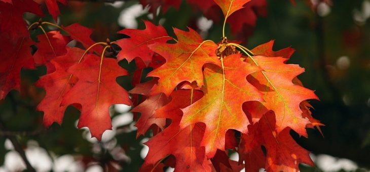 Städdag och årsmöte söndag 14 oktober
